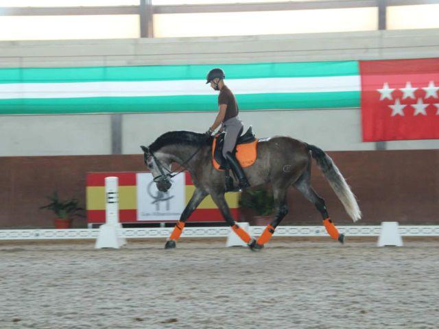 caballo Ole CAD